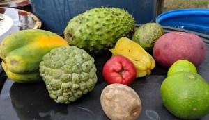 Guyana Farm Visits Day 3: Holy Fruits Batman!