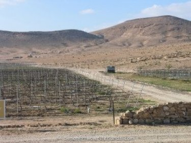 Vineyard Deep into the Negev Desert