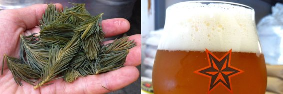 Mad Scientists #10: Spruce Tip Ale