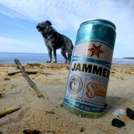 jammer-beach-dog