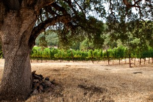 Michael's Vineyard, Six Sigma Ranch