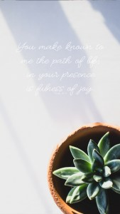 Succulent Ps 1611 Lockscreen