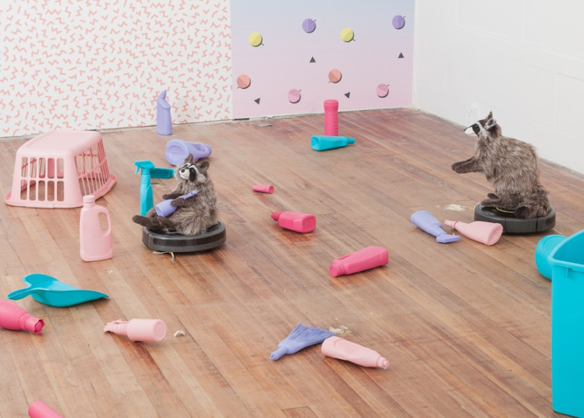 """Two of the raccoons on Roombas moving in front of a wall with a pink chevron pattern. One is reclined and holds one of the bottles, the other is standing with its arms outstretched. Lux, Maria. """"Dominus."""" 2017. installation view. """"Dominus,"""" DEMO Project, Springfield, IL. Courtesy of artist. Photos: Will Arnold."""