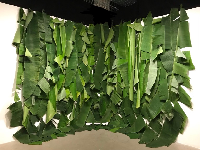 Image: Photo of Devyn's installation at SAIC of big verdant green banana leaves attached to the top of a white gallery wall and droop all the way down to the floor, leaving a few specs of the white wall between them. Photo courtesy of the artist.