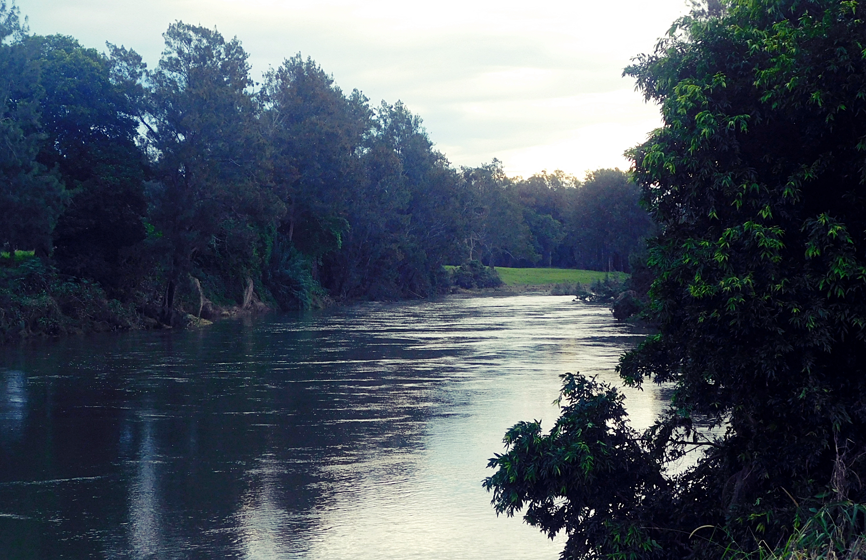 RIVER RUNNING HIGH IN BELLINGEN