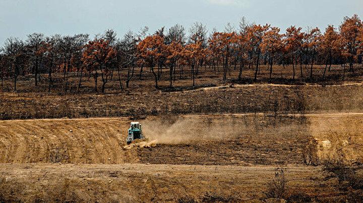 Manavgat küllerinden doğacak: yanan ormanlar 100 milyon fidanla tekrar yeşerecek