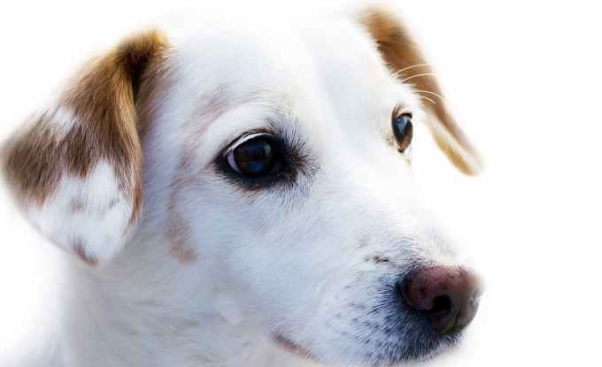 National Dog Day 2018