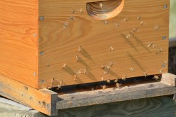 Ice storms heavily impacted the bees' production this year.