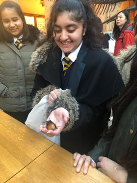 Photo of pupils handling Madagascan Hissing Cockroaches at the Natural History Museum