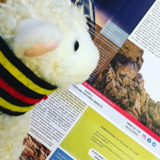 Photo of Agnes the Access Lamb reading the first Year 11 class materials