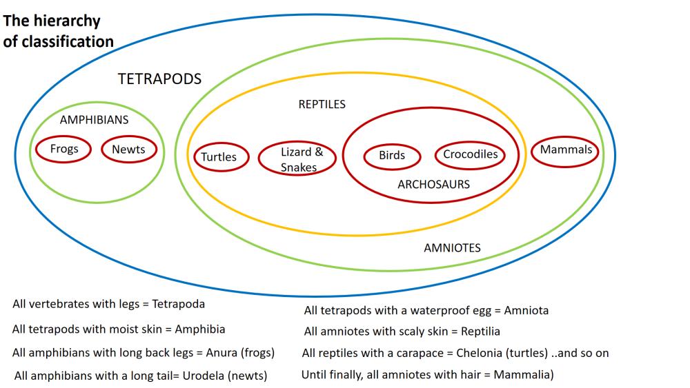 Hierarchy of classification diagram
