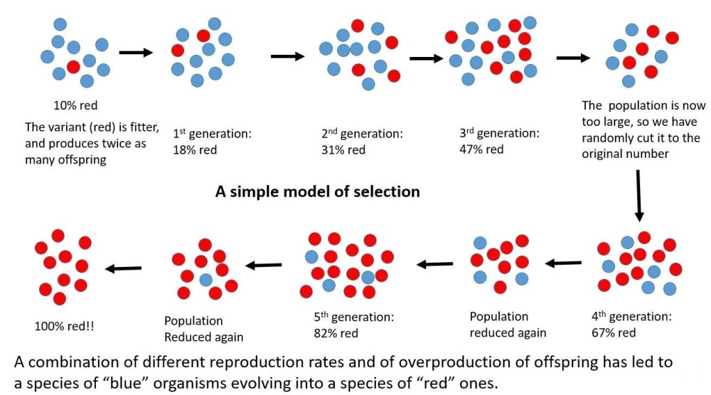 A simple model of selection