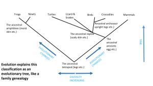 Evolution explains classification as a tree, like a family genealogy