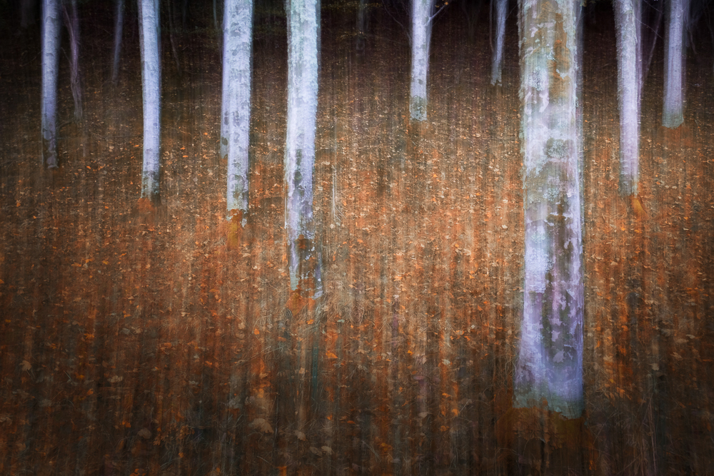 Vanda Ralevska: Light in the Dark of the Forest