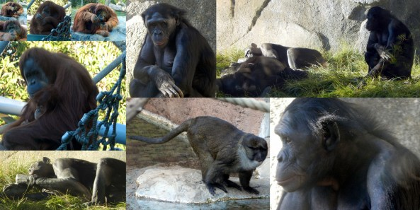 San Diego Zoo Collage # 2