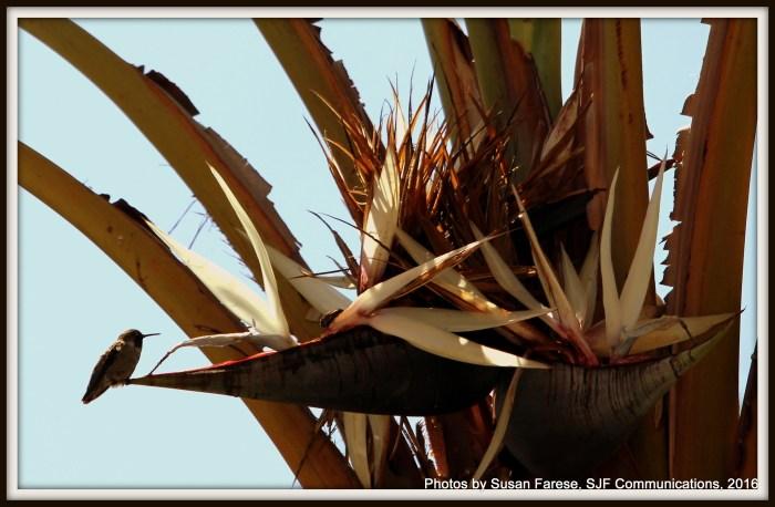 birdinbirdofparadise