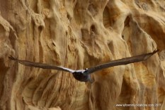 Wild Wingspan