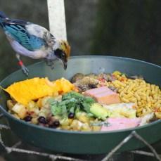 sdzoo.bluebird2