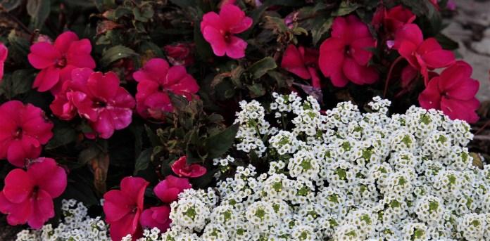 flowers.IMG_5824