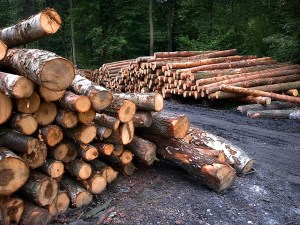 Forestry & Firewood