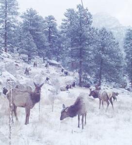 Elk by MK