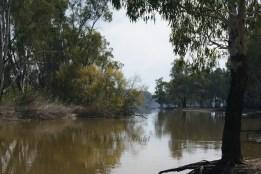 Murray River at the Narrows near Barmah