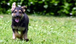 dog-running-outside