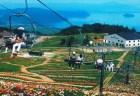 びわ湖箱館山ゆり園2018の見頃や開花情報と開園日程は?