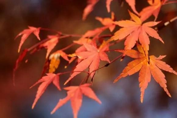 志賀高原の紅葉2016見頃とおススメの紅葉スポットはココ!