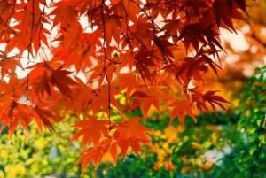 京都勝林院の紅葉2016見ごろ時期と紅葉スポットはココ!
