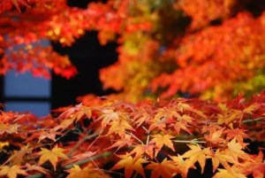 圓光寺の紅葉2017見ごろ時期とおすすめの紅葉スポットはココ!