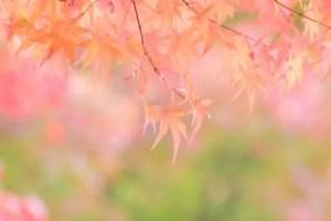 嵐山の紅葉2016見ごろの時期とライトアップや紅葉スポットはココ!