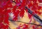 宝厳院の紅葉2018の見ごろ時期やライトアップは?