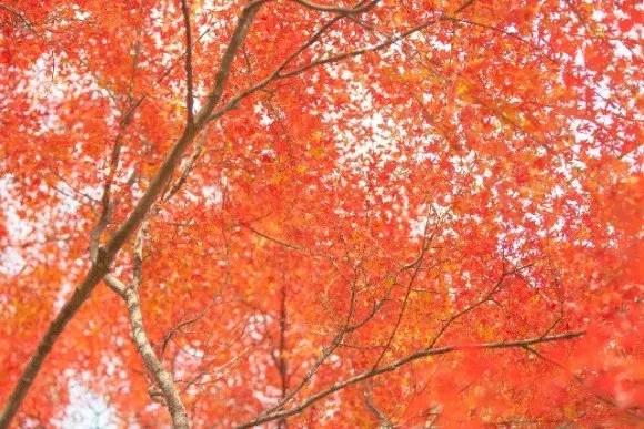 八ヶ岳高原の紅葉2016の見頃時期と紅葉狩りはココがおススメ!