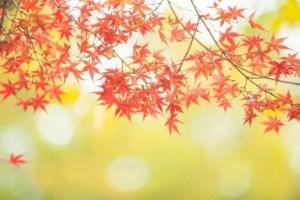 大阪の紅葉2017名所や穴場スポットと見ごろ時期やライトアップ