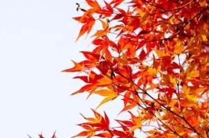 高尾山の紅葉2016見ごろ時期ともみじ祭りと紅葉スポットはココ!
