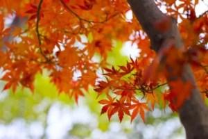富士河口湖紅葉祭り2017のライトアップと見ごろ時期は?