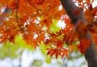富士河口湖紅葉祭り2018のライトアップと見ごろ時期は?