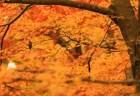 昭和記念公園の紅葉2018見ごろ時期とおすすめスポットはココ!