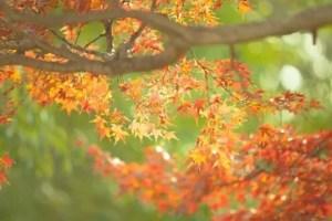 那須高原の紅葉2016の見ごろ時期と紅葉狩りスポットはココ!