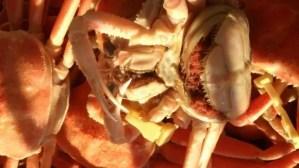 北陸でカニ食べ放題を楽しめる温泉宿おススメ7選!【富山・石川・福井】
