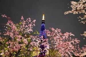 東京の桜・花見の名所や穴場おすすめ10選と開花情報2018!