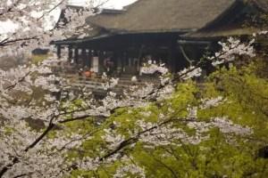 京都の桜・花見の名所や穴場おすすめ10選と開花情報2018!