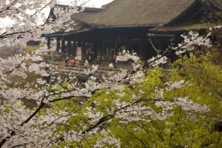 京都の桜・花見の名所や穴場おすすめ10選と開花情報2019!