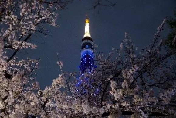 東京の夜桜ライトアップの名所や穴場スポット10選!