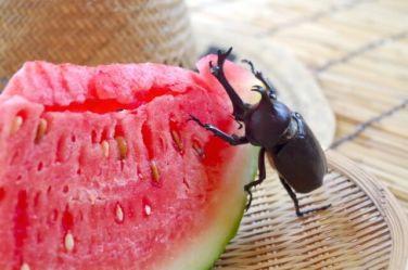 蚊取り線香 ペット用