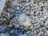 201-01-02-frost-cystrals3_BillAmman