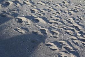 Skagit County Free Kids Activities Beach Combing