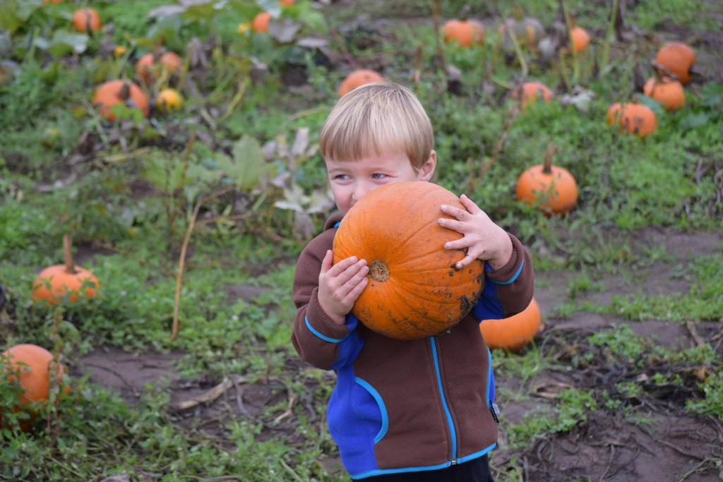 Pumpkin patch Mount Vernon