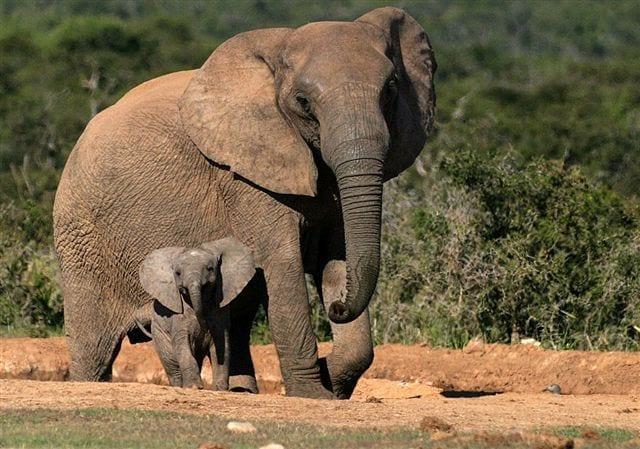 Addo Elephant Park Port Elizabeth up fees
